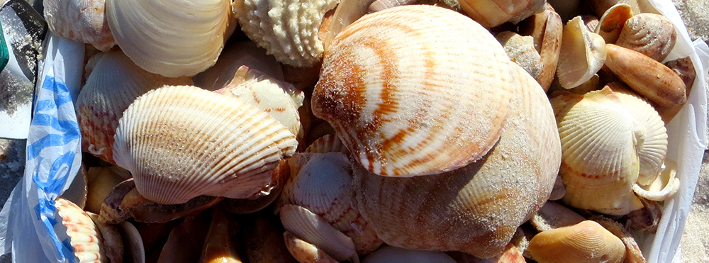 Bag of Sanibel Shells