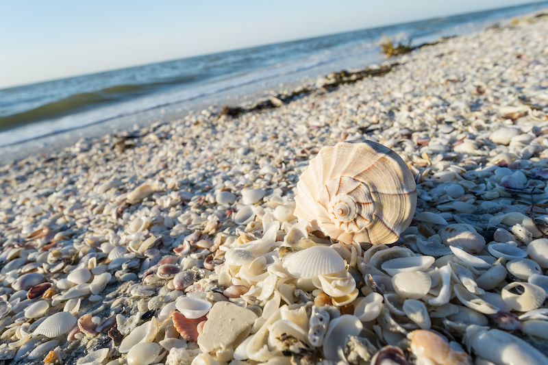 Sanibel Island shelling