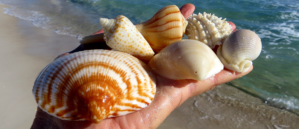 Guide To Shelling On Sanibel Island