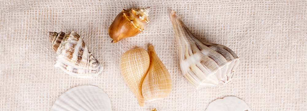 What shells can you find on Sanibel