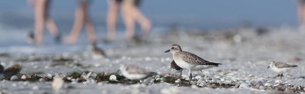 Bird on the beach on Sanibel Island