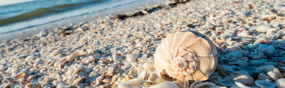 Shelling on Sanibel Island's beaches