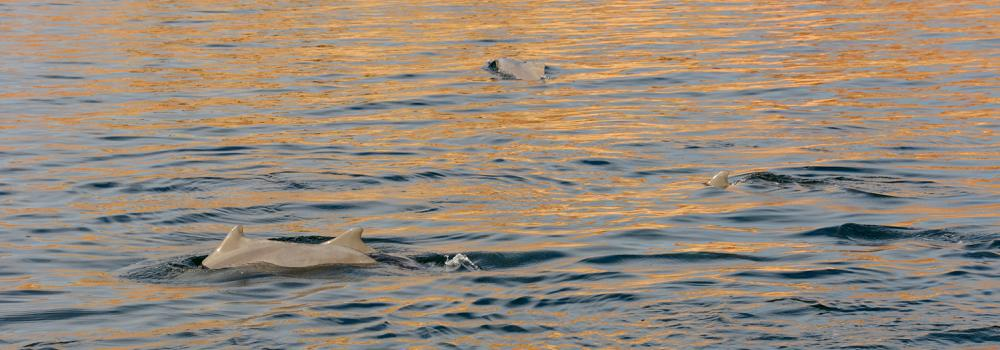 Valentines Day Sunset Dolphin Cruise